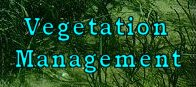Vegetation Management Dallas Fort Worth TX